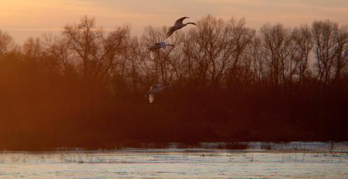 La Loire et sa faune